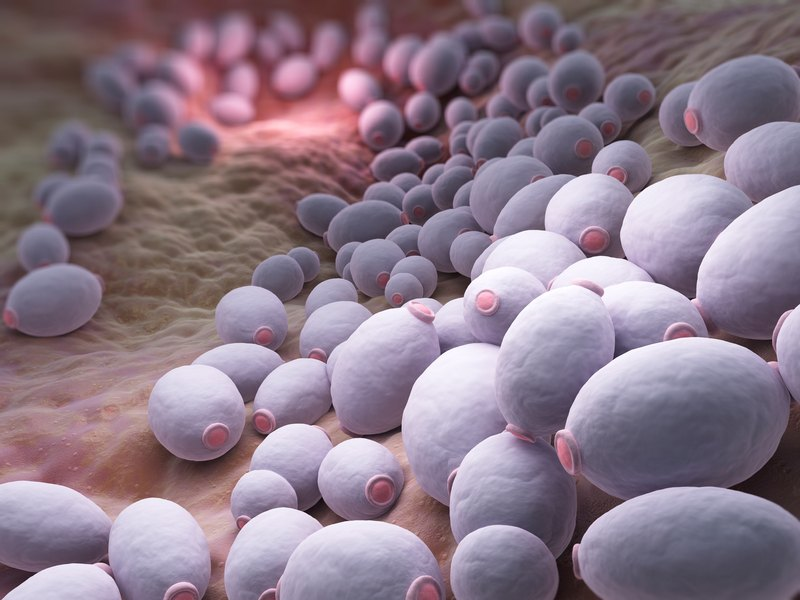 Image result for candida