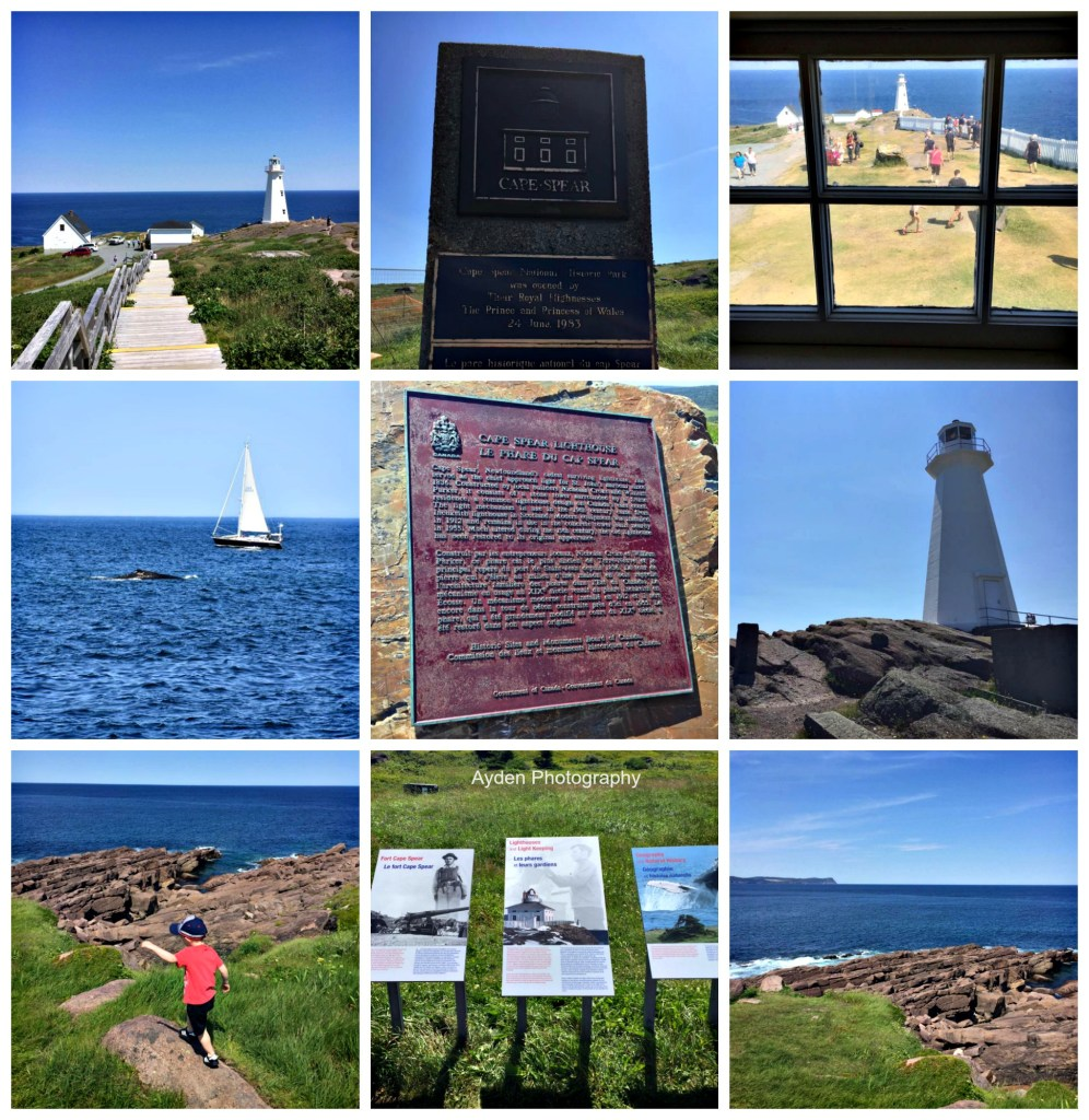 4Free Places to visit while in Newfoundland Cape Spere
