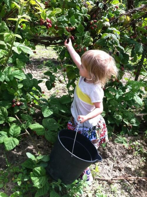 July4-EdithBlackberry