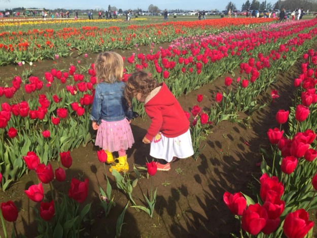 March 2015 - Tulip Fest - in the tulips