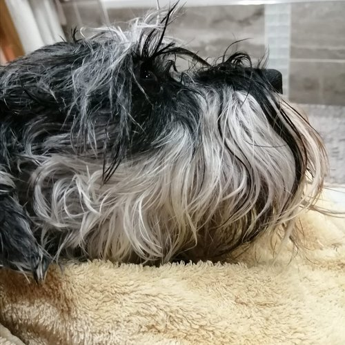 The-truth-about-bathing-your-dog-Layla