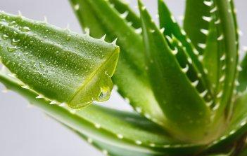 Caduta di capelli. 7 rimedi naturali per rinforzarli | Naturalmente