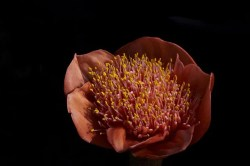 Flora bakteryjna pochwy a infekcje
