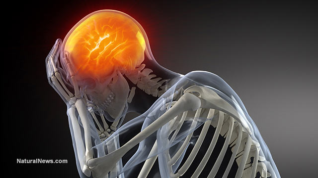 https://i2.wp.com/www.naturalnews.com/gallery/640/BodyParts/3d-Model-Human-Brain-Skeleton-Pain.jpg