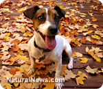 Dog-Happy-Puppy-Leaves.jpg