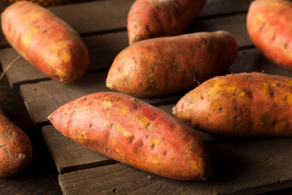 Image: Off grid living: Grow 25 pounds of sweet potatoes in a bucket