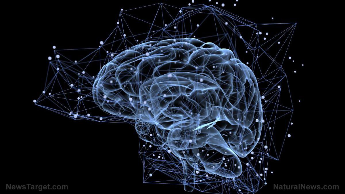 圖像:發現Omega-3油阻止導致阿爾茨海默病的神經炎症