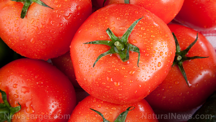 Image: Tomatoes found to halt stomach cancer due to anti-cancer nutrients