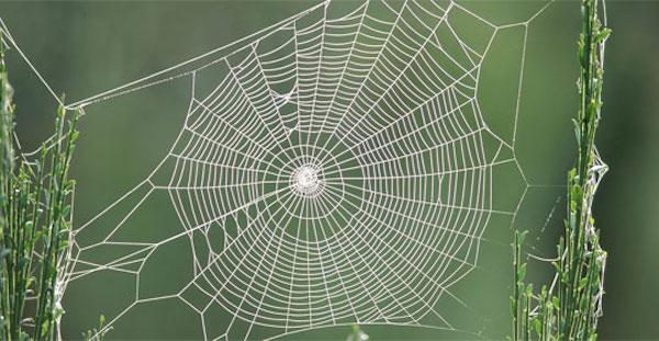 Seda de araña la innovación para reparar huesos rotos