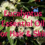 Eucalyptus Essential Oil for Hair & Skin