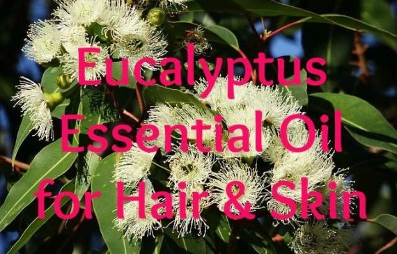 eucalyptus-essential-oil-for-hair-and-skin