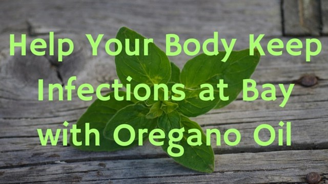 help-your-body-fight-off-infections-wtih-oregano-oil
