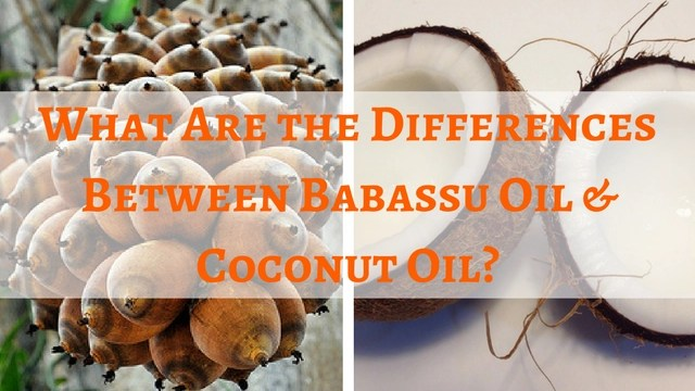 what-are-the-differences-between-babassu-oil-and-coconut-oil