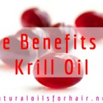 The Benefits of Krill Oil