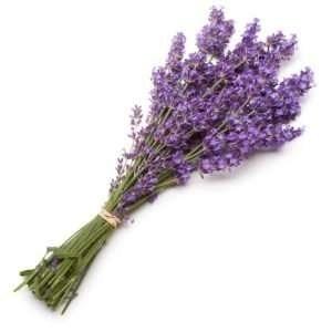 fresh lavender sprigs