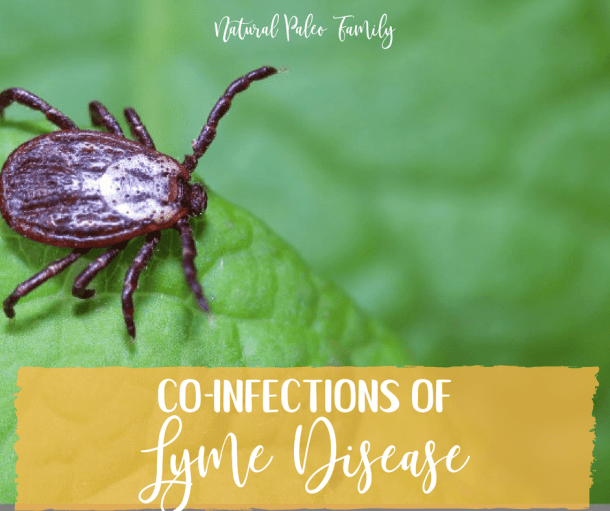 "Lyme disease is an epidemic. The CDC reports 300,000 new cases every year, and that's only the ones that are diagnosed. We know that there are a lot of cases that go undiagnosed because Lyme testing (Borrelia burgdorferi) is so unreliable, so the number of people who contract it every year is likely much higher. It is called ""the great imitator"" for good reason; its symptoms range far and wide, and can often be attributed to countless other conditions. And when you take into account the many co-infections of Lyme disease, we're left with an unlimited combination of symptoms that stump most general practitioners and even some specialists."