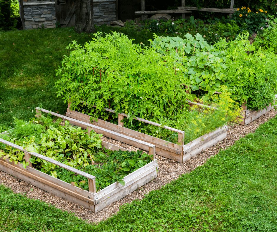 raised garden beds with vegetables, grow your own food