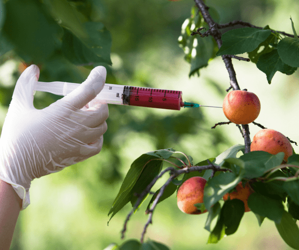 latex gloved hand injecting an apple on a tree with a red liquid