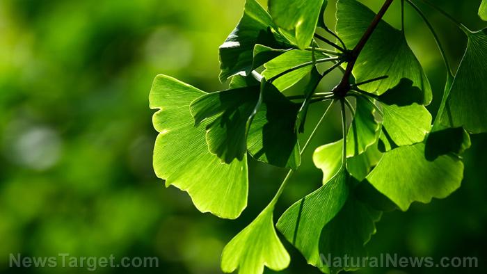 Iron Supplements Trees