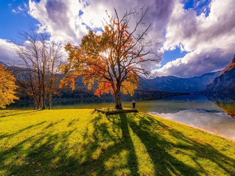 fall colors nature trees Mateja Petje Slovenia