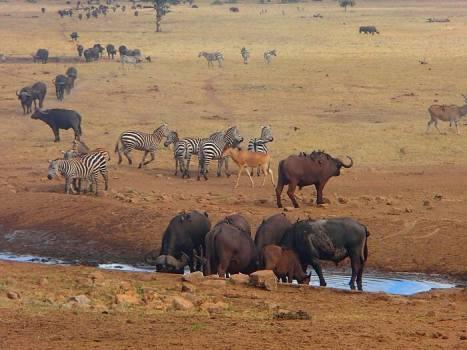 Image result for tsavo national reserve
