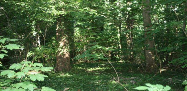 NSG-Barmen-Wald-1-1024x500