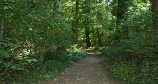 NSG-Barmen-Wald-2-550