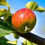 Planting A Fruit Tree Advice On How To Plant Well