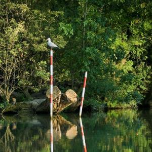 Read more about the article Balade nature autour des îles de la Marne