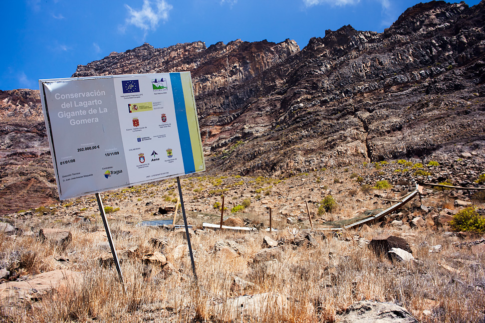 Risco de la Mérica - terra typica and the entire distribution area of Gomera Giant Lizard (Gallotia bravoana). The information board is telling about a conservation project supported by the EU. One of the aims of this project was building a fence in front of the habitat of the lizards. This fence collapsed after the project was finished, and the protection area was looking abandoned when I visited it.