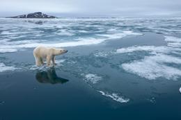 A polar bear on thin ice