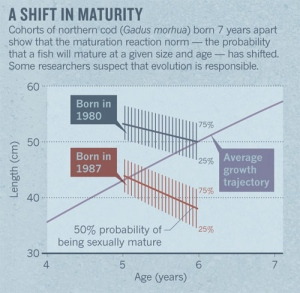 Shift in maturity
