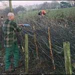 Hedging success in National Park - Picture courtesy of Bryan Wright
