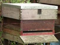 The bee is worth around £200 million to the UK economy.
