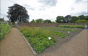 Initial seed production beds for the UK Native Seed Hub now open to the public at Wakehurst Place. Pic - RBG Kew
