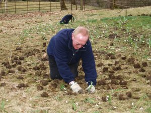 Thousands of snowdrop bulbs are being planted in the gardens