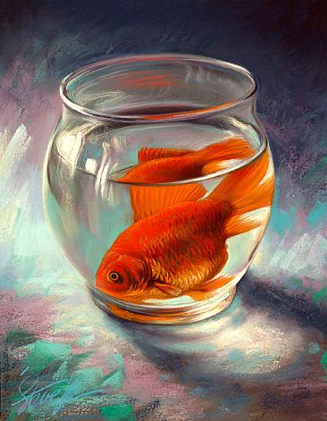 Glass houses - Domestic goldfish - Domestic goldfish ....all alone in a glass bowl by Steve Morvell