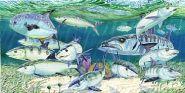 bonefish permit barracuda Sugarloaf Showdown