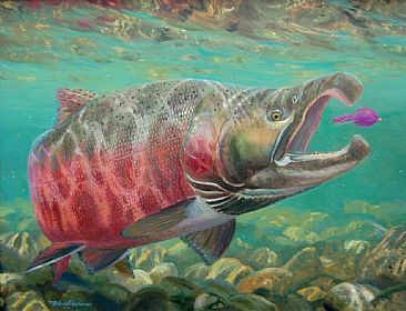 Coho Salmon Painting Art By Mark Susinno