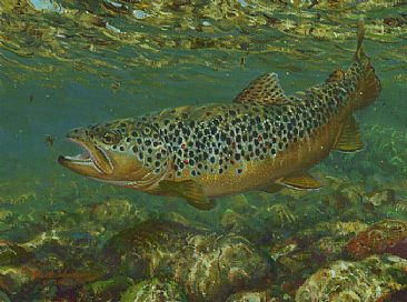 Brown Trout Taking A Nymph Painting Art By Mark Susinno