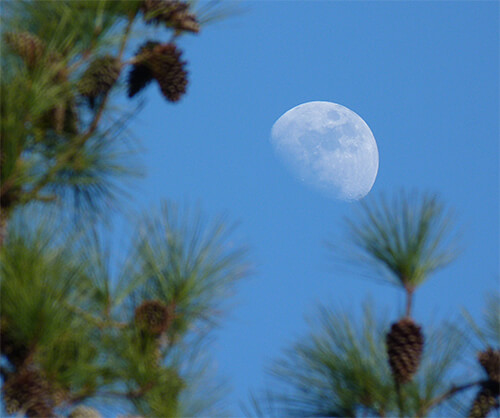 On its way to becoming a full moon.