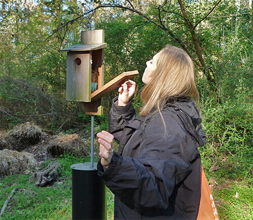Ranger Kristen checks out the nest box at Cow Pasture.