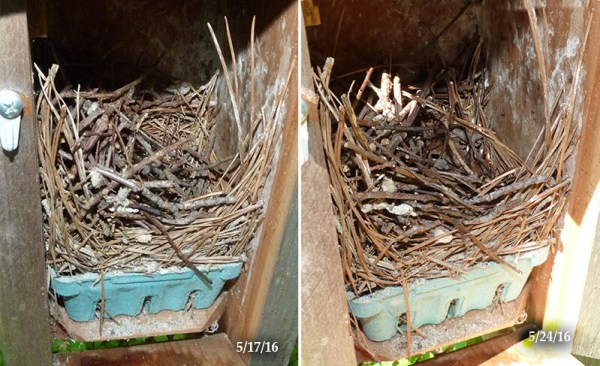 No work on nest at Woodlands nest box (5/24/16).