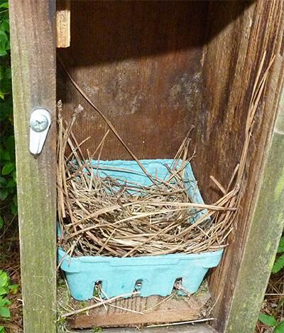 Amphimeadow nest unchanged since last week (5/31/16).