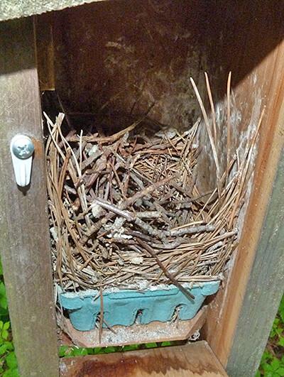 An abandoned wren nest at Woodlands nest (5/17/16).
