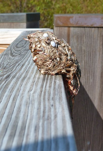 A bird pellet on the railing of Wetlands Overlook.
