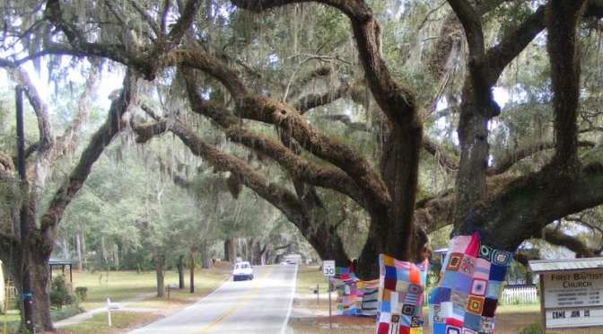 """""""Yarn Bombing"""" on The Avenue of Oaks in Floral City"""