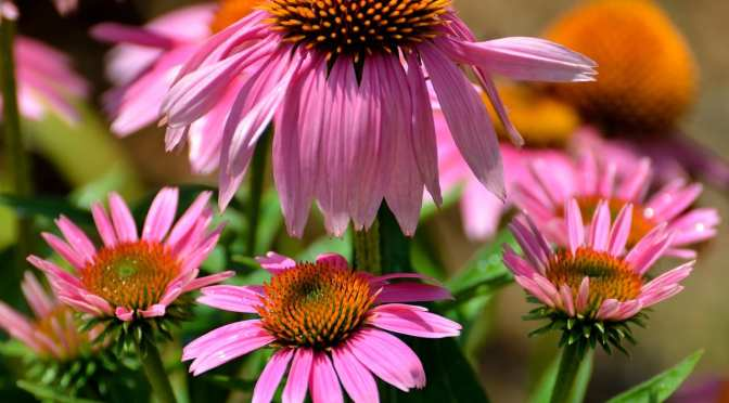 Two free Florida-friendly gardening workshops offered in April