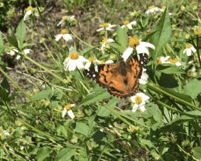 Butterflies aplenty.