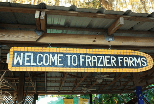 A Corny Obsession for Golden Fans at Frazier Farms